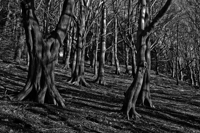 trees-2161977_960_720